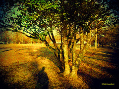 Tree #painting (Stephenie DeKouadio) Tags: canon photography outdoor painting art artistic artwork tree trees shadow shadows virginia