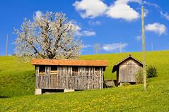 Holzschopf (fotojaps) Tags: schweiz switzerland nikon suisse natur luzern wolken april nikkor holz landschaft 2009 baum frhling nikkon d300 eich holzlager nikkorafd35f2 fotojaps