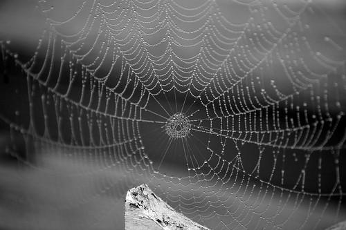 1/52: Spider Web