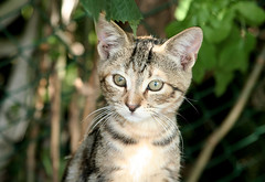 Wild cats (Vittoriofe) Tags: cats dogs nature animals kitten kitty kittens natura gatti domestici animali cani mici cuccioli teneri kittenmagazine