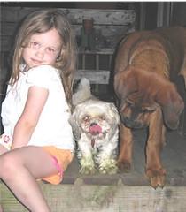 Marina, (Born 1/30/06) (muslovedogs) Tags: dogs puppy mastweiler myladyoffspring lilboyoffspring