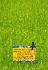 Eka Pakhi (Lazyousuf) Tags: sylhet bangladesh