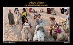 HURGHADA JEEP SAFARI (Albert ☺ bognerart.eu) Tags: sahara geotagged photo foto sonnenuntergang desert albert dune egypt camel desierto egipto duna ägypten egitto bah hurghada düne kamel wüste deserto bedouin désert Ägypten beduini cammello hamada egy beduino égypte mısır jeepsafari bogner beduíno iso80 sanddüne çöl hammada beduinen pustinja camélido bédouins egipat camélidé sandwüste albertbogner bognerart weitwinkel1 ev11 artmemberssalzburg colors300000 bognerartprizesmedalsandawards steinwüste alghardaqah felswüste rgb160140130 fotoexcelente albahralahmar gouvernementrotesmeer muhafazatalbahralahmar alghurdaqah algurdaqa ilgardaga ilgurdaga geo2734 redseagovernorate Αίγυπτος mannaitours geo270337 geo27043366 geo27038413365542 desertodosaara Βεδουίνοι
