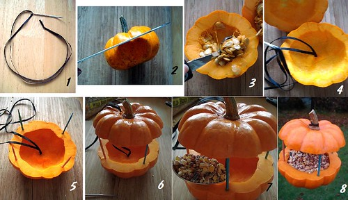 How to recycle a small decorative pumpkin into a bird-feeder