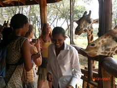 Time to feed the giraffes!