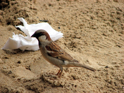 Birdy Num-Num