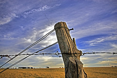CrossFenced (FotoEdge) Tags: ranch sky usa clouds dinner rural golden highway cattle beef blues headlights pasture missouri fields prairie desolate livestock pinetrees frontier vast midwestern fotoedge cattlecountry oldroadtoexcelsior crossfenced