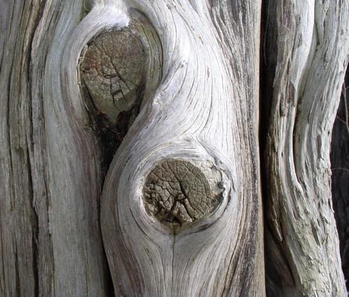 TreeDetail