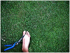 soy inocente, lo juro (el.nalga@gmail.com) Tags: green grass canon garden pie foot is photo pain toe picture pasto pies greatshot hermoso goodshot suffering dolor interesante beutiful fotografa smrgsbord sufrimiento 720 greatcapture goodcolours perfectshot nalgaman goodcarpture