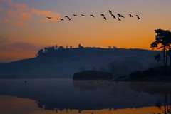 Get Those Geese Off (ericwyllie) Tags: morning trees mist colour weather birds fog clouds sunrise landscape dawn scotland geese eric background 2008 kilmacolm gloaming inverclyde naturesfinest knappsloch ericwyllie diamondclassphotographer