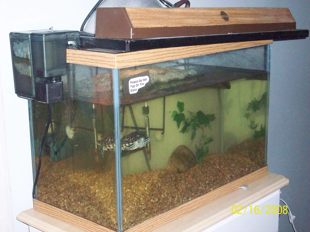 my turtle marvin's tank