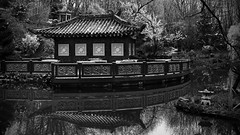 Asian Garden in 16-9 format (!Shot by Scott!) Tags: birthday blackandwhite reflection water scott pond champagne sony lewis australia peanuts monotone banana photograph chase bling alpha 700 slippers mlb asiangarden f8andbethere 16to9 allrightsreserved nohdr plentyoffish mnzesheim   dslra700 scottlewis cashforclunkers yahoosearchtags randontagstoseeifitaffectsmystats youdonthavetocanon