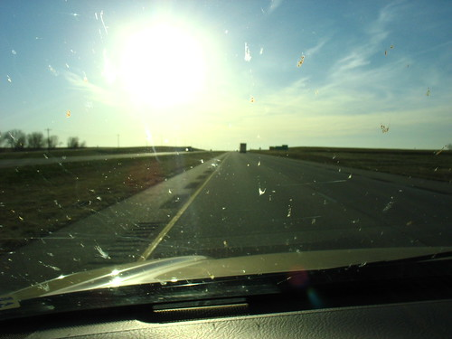 sun, asphalt and bugs
