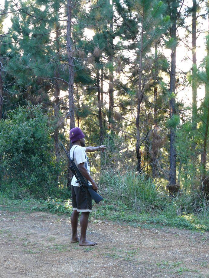 Coup de chasse Bopope Mai 2008 #1: herbert