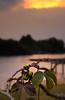 A peaceful stroll in Penarik (DSC3663) (Fadzly @ Shutterhack) Tags: sunset wild flower macro d50 garden landscape nikon quiet bokeh malaysia tranquil terengganu fishingvillage nikonstunninggallery setiu penarik shutterhack nikonafsnikkor50mmf18dc kampungpenarik gentleseabreeze