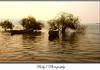 Living in lake (baby7) Tags: lake tree explore interestingness172 ostrellina