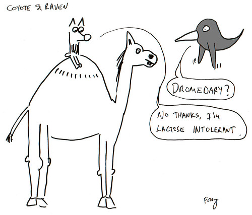 366 Cartoons - 204 - Coyote and Raven
