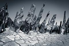life on mars (Dean Ayres) Tags: uk seaweed beach thames seaside rotten essex stumps canveyisland mudwood
