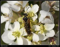 Baño de polen (Warper4) Tags: naturaleza flores flower macro nature insect photo reflex flor olympus insecto uro warper e520 warper4 sigma105mmf28exdgmacrofourthirds