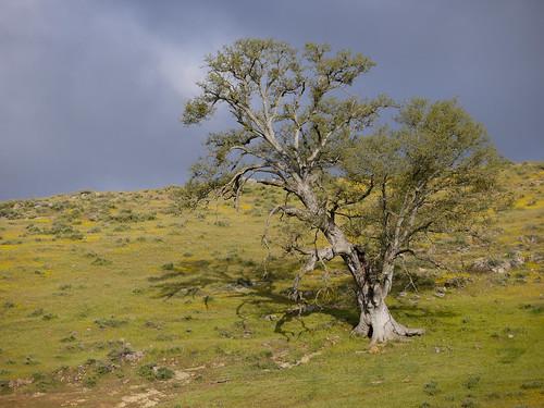stormy skies on oak