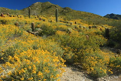 Spring in the Sonoran Desert (doveoggi) Tags: flowers arizona spring scottsdale 2816 the4elements mcdowellsonoranpreserve