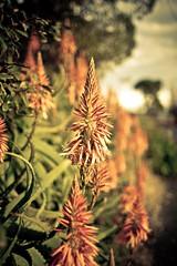 Flora (pixelgrit) Tags: mywalktowork
