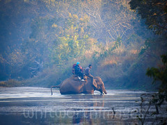 Elephant safari (whitworth images) Tags: morning travel nepal people elephant tourism water misty river nationalpark asia crossing safari riding jungle asianelephant nepali mahout elephasmaximus bardia terai bardiya thakurdwara bardianationalpark bardiyanationalpark
