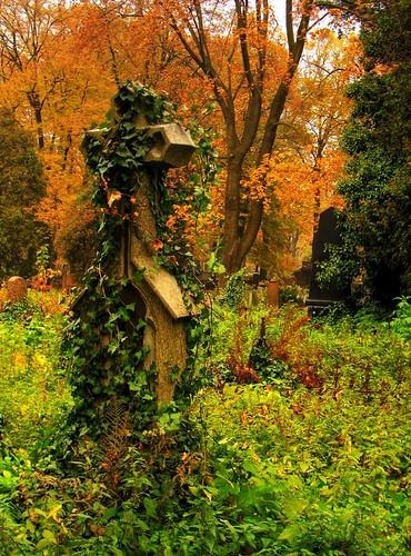 cmentarz stary