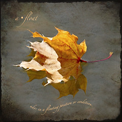 the autumn poets sing ... (jude) Tags: autumn fall texture leaves square canal leaf maple bravo explore jude judith dictionary squared 2007 defined emilydickinson naturesfinest meskill judithmeskill bsquare ttv magicdonkey completeherbal mywinners abigfave 30faves30comments300views 50faves50comments500views memoriesbook judeonflickr
