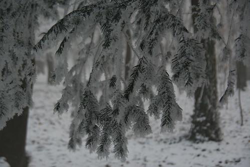 iarna in parc doi