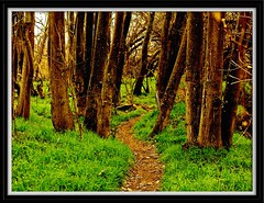 On the Trail (Pluck'n Bach) Tags: nature floraandfauna