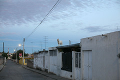 IMG_2002 (locaburg) Tags: dog v zacatecas monteescobedo