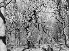 Feb 08 093A (moselmeister19) Tags: trees flickr district peak estrellas