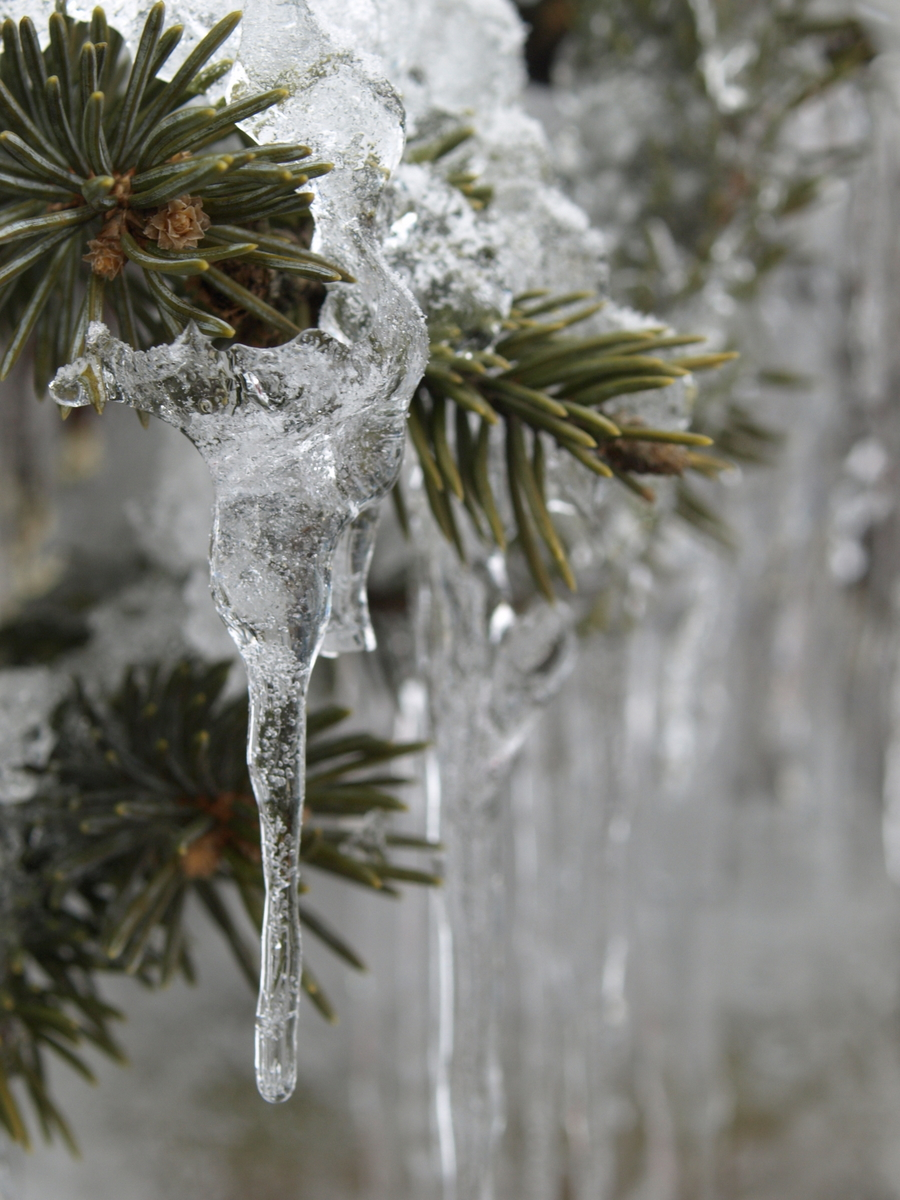 Icicle of the Rokko mountain