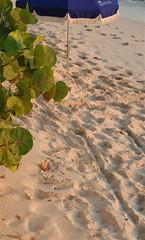 The footsteps of time ~ (**Mary**) Tags: beach sand footprints caribbean stmaarten beachumbrella caribbeanocean