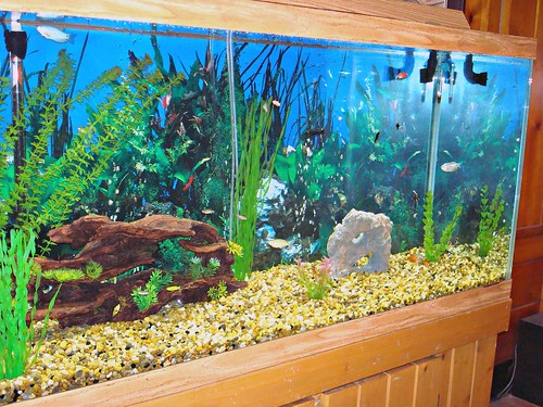 how to make fish tank clear