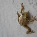 Reptiles, Cuban Tree Frog