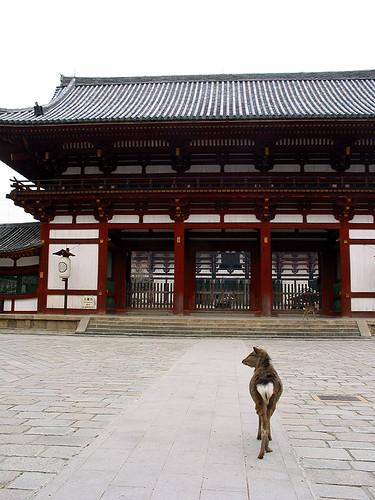 東大寺之鹿