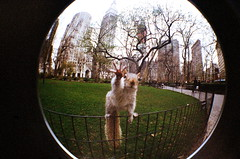 Squirrel - Madison Park Park - New York