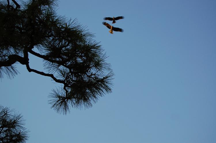 _sea-eagle-2_