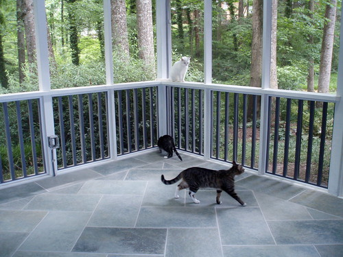 the cats explore the porch