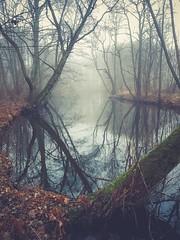 Misty morning/Samsung S7 (Magnus Eriksson75) Tags: sweden sverige nordic scandinavia samsung s7 mobile phone nature natur landscape mist misty water creek