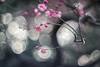 _DSC1307 (kymarto) Tags: bokeh bokehlicious depthoffield dof dallmeyer supersix pink plumblossoms plum ume flowers flowerphotography oldlens vintagelens nature naturephotography nikon nikond800
