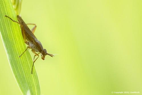 insetto 10f