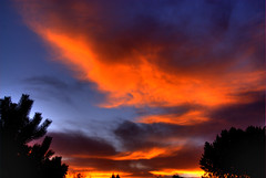 Sunset (Thad Roan - Bridgepix) Tags: blue trees sunset sky orange silhouette clouds skyscape colorado denver littleton 200710