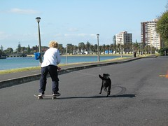 Whats New ? - Dog-boarding ! (Robert Lurie) Tags: street wood bridge dog island skateboarding capetown lagoon skateboard woodenbridge milnerton woodbridgeisland dogboarding milnertonlagoon