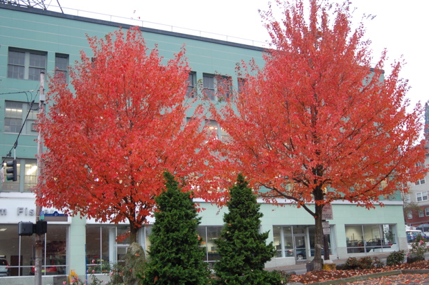 111307_volvo_red_trees_horiz_enhanced