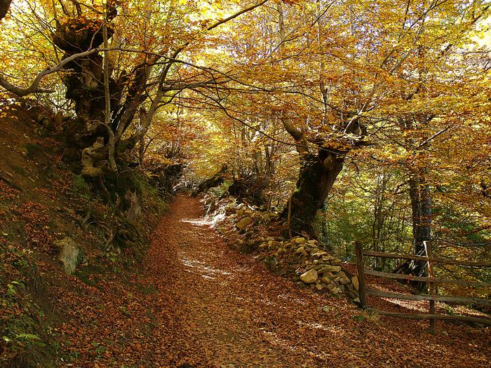 Camino hacia el tabayón de Mongayu
