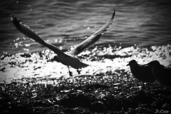 Take Off (Damien Cox) Tags: uk sea bird beach water seaside nikon flight bognorregis naturesfinest d40 birdflight afsnikkor55200 damiencox snaptweet dcoxphotography