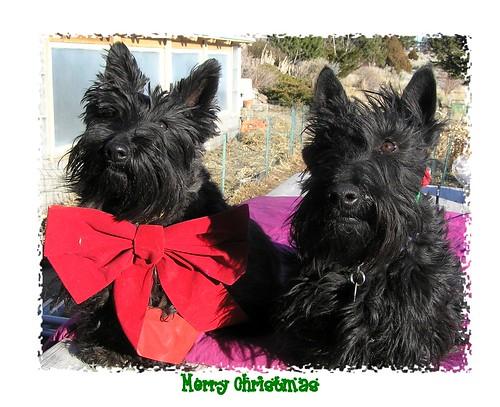 christmas dogs 07